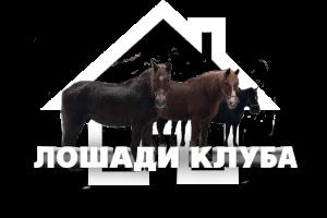 лошади клуба