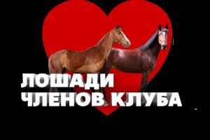 лошади членов клуба