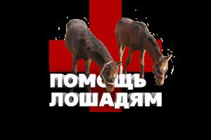 помощь лошадям