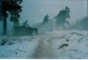 Багровый цвет снегопада 5